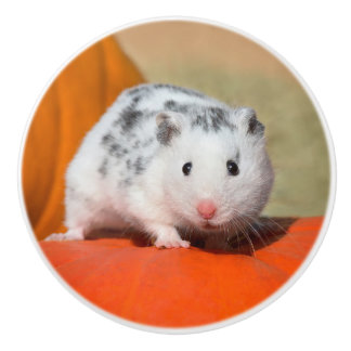 Cute Syrian Hamster White Black Spotted Funny Pet Ceramic Knob