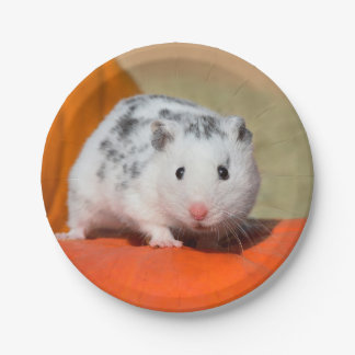 Cute Syrian Hamster White Black Spotted Funny Pet Paper Plate