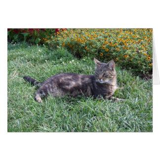 Cute Tabby Cat Photo Card
