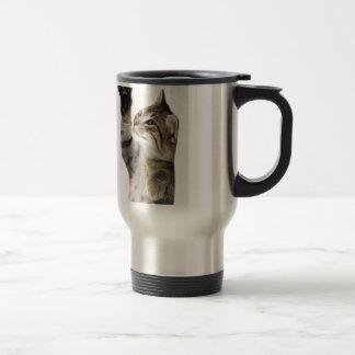 Cute tabby kitten coffee mug