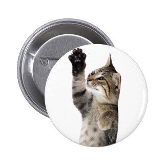Cute tabby kitten pins