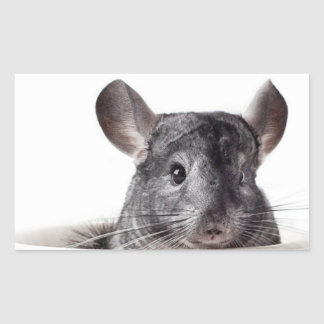 Cute Teacup Chinchilla Grey Rectangular Sticker