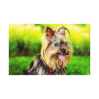 Cute terrier dog stretched canvas prints
