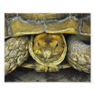 Cute Tortoise Hello Poster