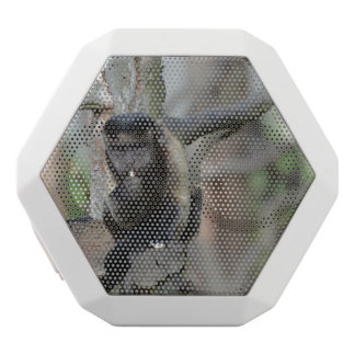 Cute Tufted Capuchin Monkey White Boombot Rex Bluetooth Speaker