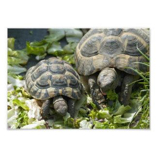 Cute Turtles Art Photo