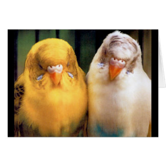 Cute! Two Budgies (One Yellow, One White) Card