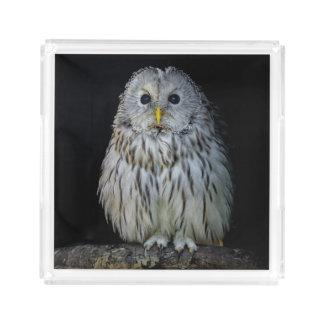Cute ural owl acrylic tray