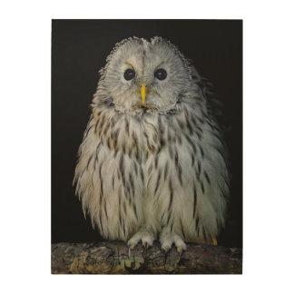 Cute ural owl wood print