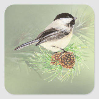Cute Watercolor Chickadee Bird in Pine Tree Square Sticker