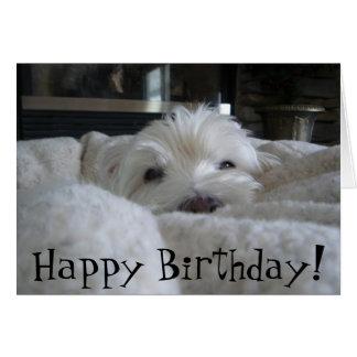 Cute Westie Face Photo Greeting Card