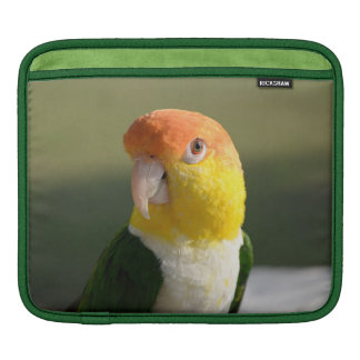 Cute White Bellied Caique Parrot iPad Sleeves
