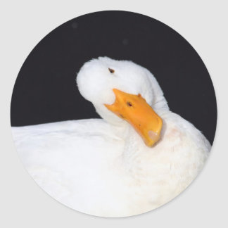 Cute, White Duck Stickers