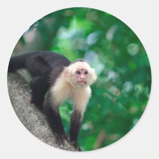 Cute white faced capuchin monkey Nicaragua Stickers