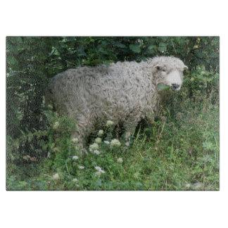 Cute White Fluffy Sheep Eating Cutting Board