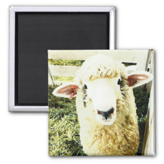 Cute White Fluffy Sheep Magnets