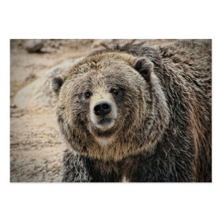 Cute Wild Animal Grizzly Bear Face Pack Of Chubby Business Cards