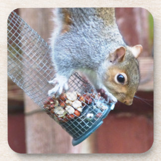 Cute Wild Gray Squirrel Coaster