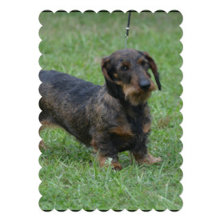Cute Wire Haired Dachshund Personalized Announcements