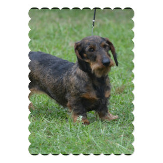 Cute Wire Haired Dachshund 5x7 Paper Invitation Card