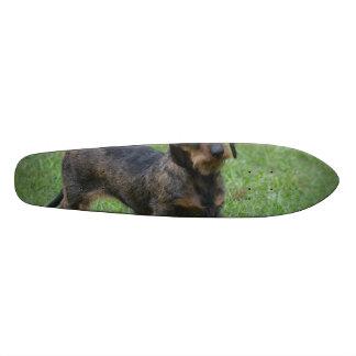 Cute Wire Haired Dachshund Skate Deck