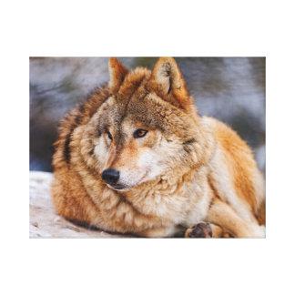 Cute Wolf Canvas Print
