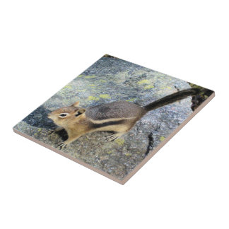 Cute Woodland Chipmunk Rodent Wildlife Photography Ceramic Tile