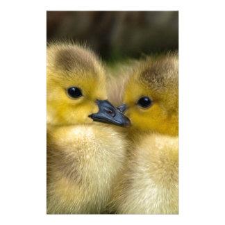Cute Yellow Fluffy Ducklings, Baby Ducks Stationery