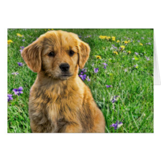 Cute yellow retriever puppy with flowers in back greeting card