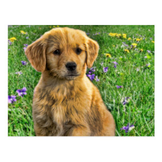 Cute yellow retriever puppy with flowers in back postcard