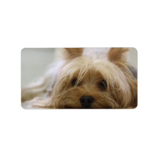 Cute Yorkie Address Label
