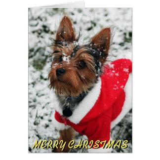 Cute Yorkie Christmas Card