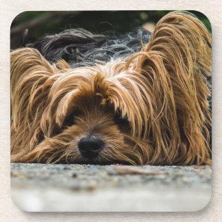 Cute Yorkshire Puppy Beverage Coaster