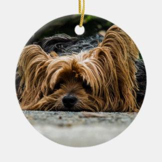 Cute Yorkshire Puppy Ceramic Ornament