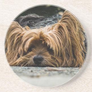 Cute Yorkshire Puppy Sandstone Coaster