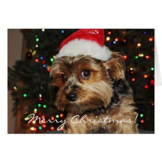 Cute Yorkshire Terrier Christmas Card