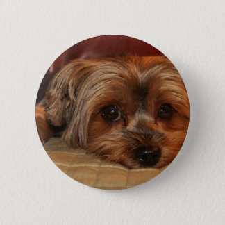 Cute Yorkshire Terrier Dog 6 Cm Round Badge