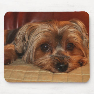 Cute Yorkshire Terrier Mousepad