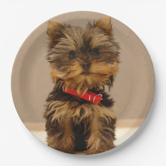 Cute Yorkshire Terrier Paper Plate