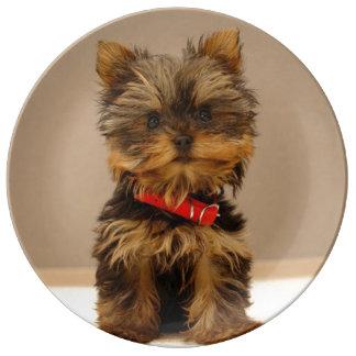 Cute Yorkshire Terrier Plate