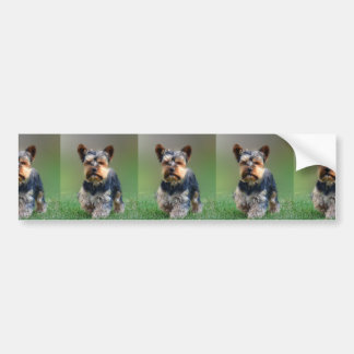 Cute Yorkshire Terrier Puppy Greeting Cards Bumper Sticker