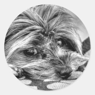 Cute Yorkshire Terrier Yorkie Black and White Art Classic Round Sticker