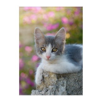 Cute Young Bicolor Cat Kitten Flowers Animal -- Acrylic Wall Art