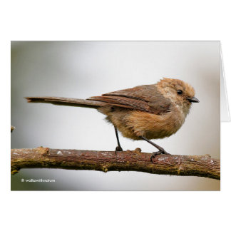 Cute Young Bushtit on the Hybrid Fruit Tree Card