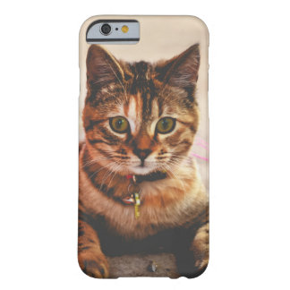 Cute Young Tabby Cat Kitten Kitty Pet Barely There iPhone 6 Case