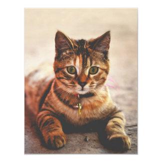 Cute Young Tabby Cat Kitten Kitty Pet Card