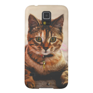Cute Young Tabby Cat Kitten Kitty Pet Galaxy S5 Cover
