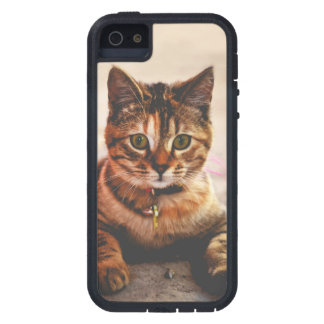 Cute Young Tabby Cat Kitten Kitty Pet iPhone 5 Covers