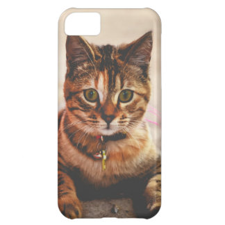 Cute Young Tabby Cat Kitten Kitty Pet iPhone 5C Case