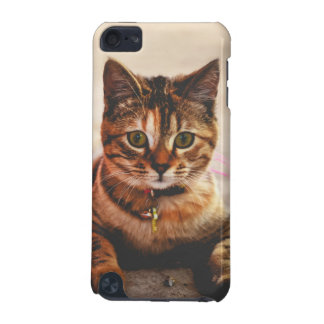 Cute Young Tabby Cat Kitten Kitty Pet iPod Touch 5G Covers